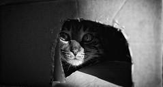 Covert Operation (Tracey Rennie) Tags: cooper hiding box cat bokeh littledoglaughedstories littledoglaughednoiret