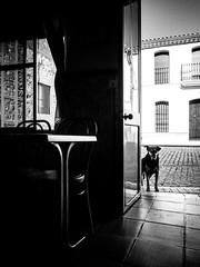 Waiting for my companion of life. (josmuoz88) Tags: compaero perro elcerrodeandvalo bar esperar waiting