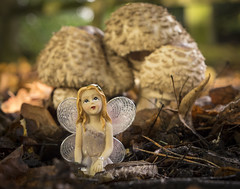 The mushroom fairy (Mark Rigler UK) Tags: small model girl wings fantasy fairy mushroom grass make belive faery faerie sprit mythical being legendary creature land toy doll people outdoor animal