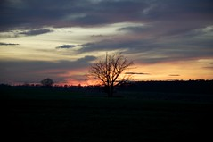 Abendhimmel (fotio14) Tags: abendhimmel sonneuntergang wolken abend landschaft baum herbst