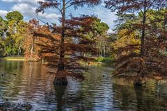 Colores del Otoo (Merly_gon) Tags: luz atardeceres colores water otoo madrid spain verde green agua plantas sonya7 hojas patos animales nubes cielo lago