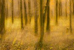 Mystical Forests (RCARCARCA) Tags: loch trees lomond undergrowth autumn leaves 5diii lochlomond canon winter 2470l scotland