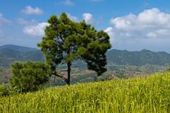 20161014-IMG_1991 (Konrad K. M.) Tags: myanmar kalaw shan