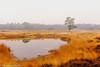 Groot-Heidestein-2 (christiaan.oomes) Tags: nikcolorefexpro autumn november landscape tamron nederland utrecht netherlands herfst d7200 heidestein