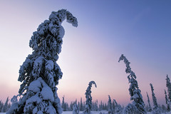 Lappland - Laponie (Mathieu Pierre) Tags: lappland laponie finnland lapland snow north night sky light silence nature landscape northern polar circle sunlight