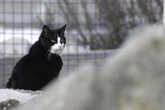 _DSC7846_ED (AndreaFranco1968) Tags: cat pirano adventure white black street