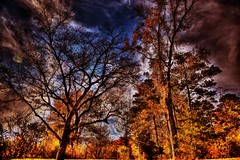 It is a riot... (Rupam Das) Tags: nikon nikkor d810 24120mm tree nature color colorful outdoor sky clouds branches travel flickr fall plant serene foliage texture atlanta georgia chattahoocheenaturecenter stunning
