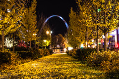 Arch of Fall (Wolf_UrbanXposure) Tags: gatewayarch arch autumn autumnleaves ginco gincotrees fall fallleaves nature naturephotography natureshot naturelove natureimage yellow landscape cityscape streetshooter streetphotography street mycity stl saintlouis stlouis missouri midwest nightphotography night nightshot nightshooters nightimages nightexplorers nightlights citylights longexposure longexp slowshutter d7200 nikon 35mm flickr flickraddicts dark sky architecture missouriarchitecture stlarchitecture stlphotographer missouriphotographer citygarden leaves