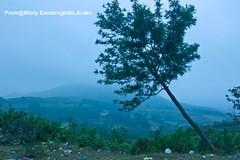 Mysterious-Morning-Raga--Araku-tree-and-garbage (prem swaroop) Tags: garbage stew ecosystem pollution tree benttree araku easternghats andhrapradesh aptourism travelindia mist mistylandscape