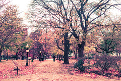 Autumn in Allen Gardens (A Great Capture) Tags: agreatcapture agc wwwagreatcapturecom adjm ash2276 ashleylduffus ald mobilejay jamesmitchell toronto on ontario canada canadian photographer northamerica fall autumn automne herbst 2016 torontoexplore city downtown lights urban colours colors light sun sunny sunshine cityscape urbanscape eos digital urbannature scenery scenic outdoor outdoors vibrant colorful cheerful vivid bright street photography woods leaves leaf foliage autumnleaves