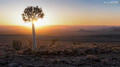 Quiver Tree to sunset (dieLeuchtturms) Tags: karas 16x9 africa afrika khoekhoegowab namibia sonnenuntergang wallpaper sunset karas