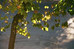 (maryam_mzadeh) Tags: light نور canonae1 film agfa