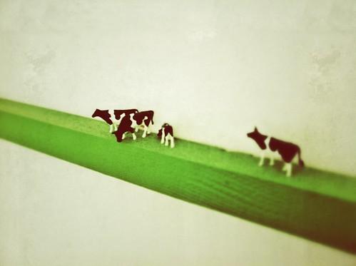 Krowy na ścianie