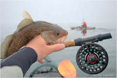 Fly fishing for cod (Nicolas Valentin) Tags: sea nature water scotland cool fishing aqua kayak flyfishing stillwater cod reel ecosse onthefly nicolasvalentin fishonthefly wayoffishing