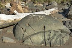 Hokianga-Koutu Boulders (scrumpy 10) Tags: newzealand nature rock stone landscape nikon natur boulders hokianga aotearoa mothernature rollingstone spherical neuseeland landschaften d800 jacqualine ozeanien newzealandnature sphericalrocks koutu scrumpy10 koutuboulders sphericalboulders