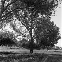 Santa Cruz (westkauai) Tags: california blackandwhite bw santacruz rolleiflex square trix d76 mxevs