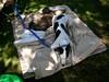 GreyhoundPlanetDaySept132009044