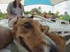 G0041370.jpg (imfaral) Tags: unitedstates southcarolina penny dogdayafternoon northcharleston