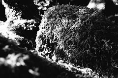 Stones (mmartinsson) Tags: light summer blackandwhite green skne moss raw stones sverige fujineopan1600 sdersen 2013 skralid skneln xpro1 vsco vscofilm02 fujinonf18