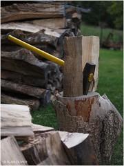 Quand homme blanc coupe beaucoup de bois, hiver est très froid !