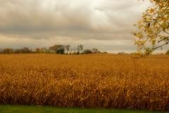 october sky (LaLa83) Tags: autumn ohio storm cold fall field rain weather clouds corn backyard farm sony alpha a230 fairfieldcounty 2013 ruralohio stoutsville ohiofoothills