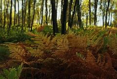 AUTUMN'S FLOOR (explore) (kenny barker) Tags: autumn scotland daarklands olympusep1 panasonic20mmf17asphlens kennybarker