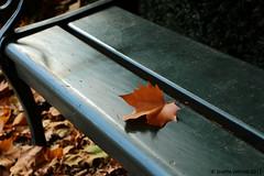 IMG_3506 (Josette Veltman) Tags: herfst veluwe kasteel gelderland rosendael rozendaal