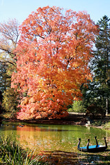 Relaxation (Explored) (stephen1855) Tags: autumn fall colors national 40mm catchy geographic oldwestburygardens 60d