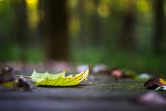 Seasons Change (Elizabeth_211) Tags: autumn nature leaf bokeh tennessee jacksontn westtn cypressgrovenaturepark sherielizabeth