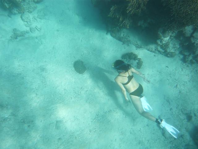 2泊3日で沖縄の離島:座間味島へ義父母と旅行☆ウミガメや魚と戯れるの写真