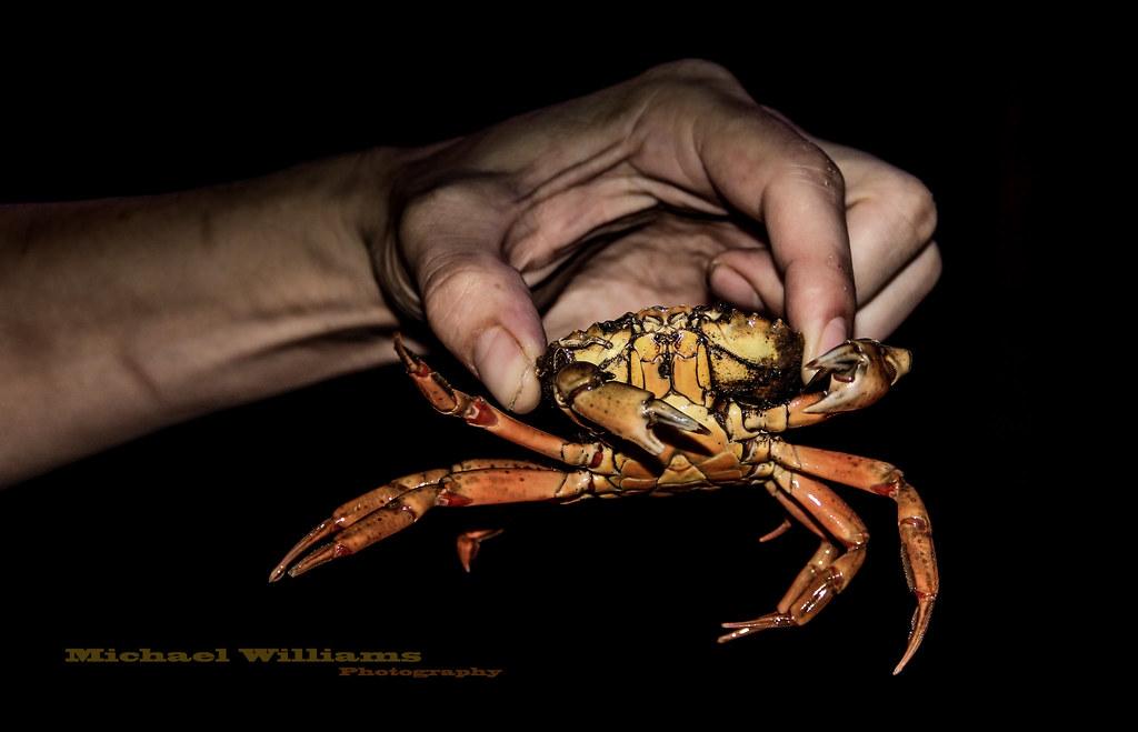 Felsebiyat Dergisi – Popular Crabs Claw Beach Cam