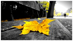 Sunday morning (marcbi91) Tags: autumn blackandwhite bw automne nokia leaf noiretblanc wb nb 500v50f feuille pureview sweetselectivecolor lumia1020