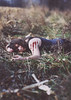 So I bare my skin and count my sins (wingardium leviosa.) Tags: portrait plants cold girl field grass self canon rebel 50mm blood corn cut f14 tanktop wrist bleed scar 50mmf14 rebelxsi bleedingout imaginedragons