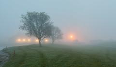 Buggy Tracks in the fog (Rachel Dunsdon) Tags: trees grass fog golf lights buggytracks millgreengolfclub