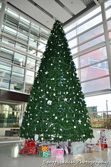 Christmas tree at Media City (jonnywalker) Tags: christmas city uk blue england sky tree architecture studio manchester northwest salfordquays christmastree greater trafford salford quays itv greatermanchester thestudios mediacityuk