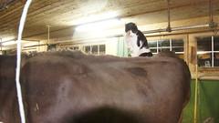 Katze (HeiAld) Tags: cats animals schweiz switzerland tiere kuh cow swiss sony snapshot stall katze alder haustiere nex schnappschuss heini kuhstall