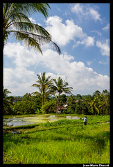 Chapeau chinois! (Jean-Marie Chassot) Tags: voyage travel bali indonesia landscape asia asie ricefield paysage paddyfield indonésie rizière
