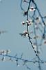 Hanami (Irina Boldina) Tags: life flowers light sky color cherry photography see photo haiku blossom cherryblossom hanami