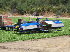 IMG_1131 (heajohnson76) Tags: california places equipment credit produce ucd leafygreens handpicking montereyco davidgoldenberg growingpractices fieldpacking harvesthandling