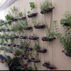 Planters_plastic bottles_Pinterest (DougBittinger) Tags: