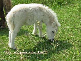 Pony`s zie je in meerdere kleuren, maar vond dit zo apart met die donkere moeder.