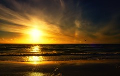 struggles today develop strength for tomorrow (Bec .) Tags: ocean light sunset sun reflection water clouds canon inflight sand seagull adelaide 1855mm southaustralia henleybeach 450d rbat75 strugglestodaydevelopstrengthfortomorrow