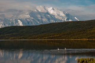 Mt. McKiney, Wonder Lake, and trumpeter Swans