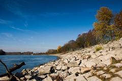 Herbstlicher Rhein