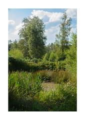 Pond at Black Rocks (m_graf67) Tags: pond water wildlife green nature landscape blackrocks derbyshire uk wirksworth cromford