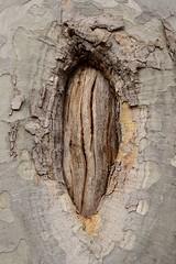 ARBRE (MONTJUC) (Yeagov C) Tags: arbre montjuc 2016 barcelona catalunya