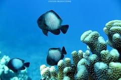 IMG_0056 copy (Aaron Lynton) Tags: lyntonproductions ocean turtle starfish maui hawaii canon g1x