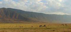 Ngorongoro Crater (janetfo747 ~ Thank You for the Views and Comments) Tags: africa ngorongorocrater nature wild wildanimals safari tanzania gamereserve arusha travel jewel deep volcanic caldera