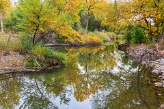 St Vrain Tranquility (Striking Photography by Bo Insogna) Tags: reflections autumn foliage trees calm stvrainriver longmont colorado bouldercounty tranquil calmness peacefulness quiet serenity jamesinsognanature landscapes fineartphotography