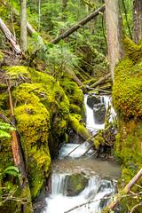 DSCF4357 (LEo Spizzirri) Tags: bevin morgan peter odin huck huckleberry shug cabin northwest seattle forest pacific mushroom moss josh betsy ladder green thick